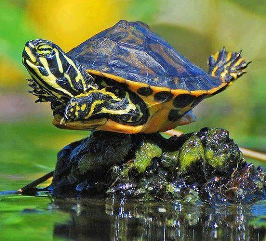 turtle-stretching